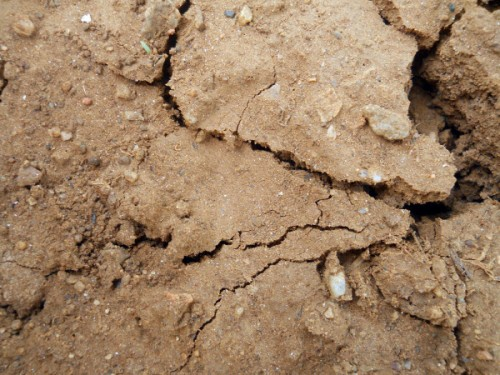 Cracked Ground Clay Texture