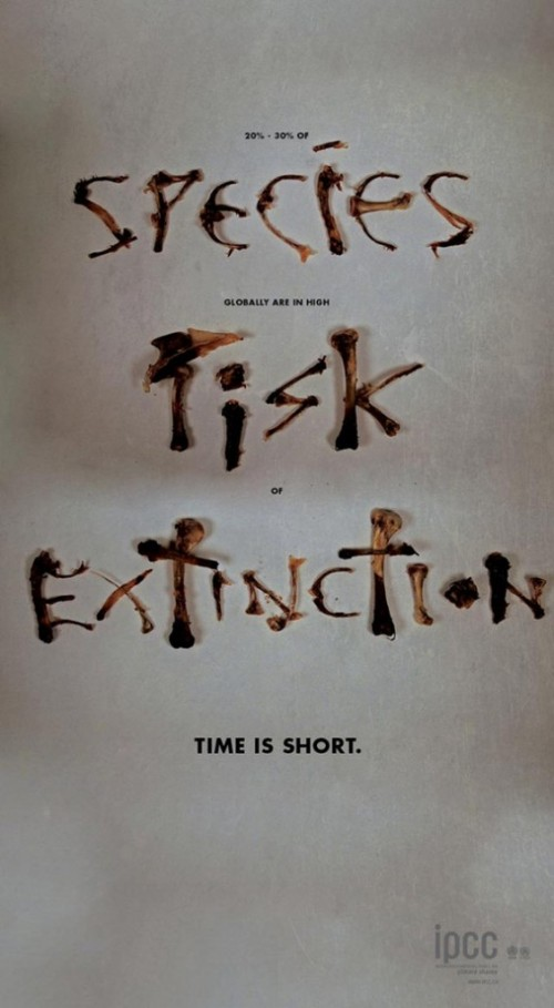 Species Risk Extinction