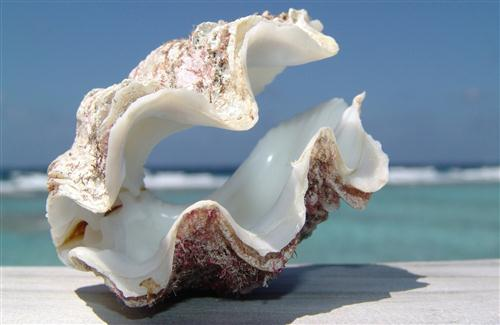 Sea Shell on Beach HD Wallpapers